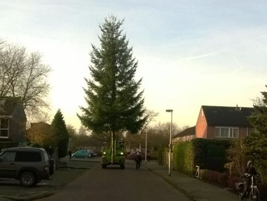 Ook in 2017 kerstboom op pleinen Biddinghuizen