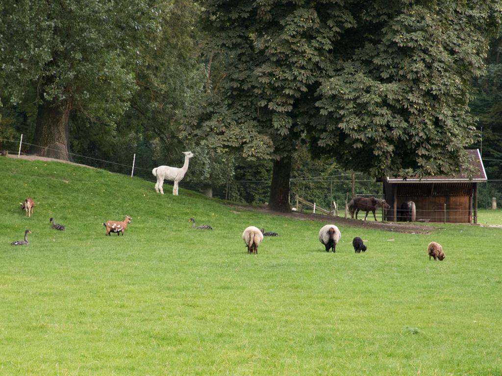 Walnotenboom bij Scharrelberg