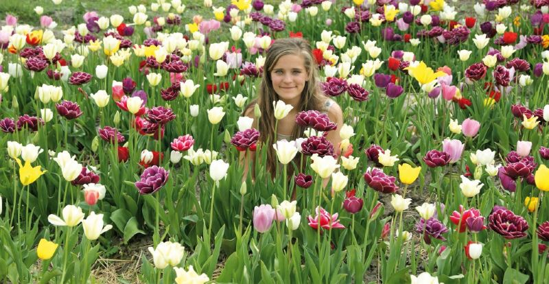 Internationale aandacht: Tulip Fields & Flevo FunFields