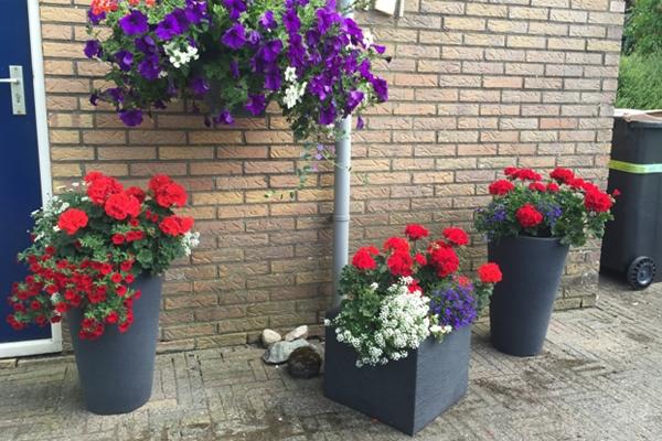 Plantenmarkt in Biddinghuizen